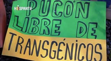 Captura nota hispantv monsanto en pucon 19102013
