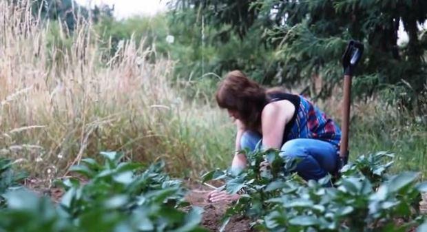 Captura LA SEMILLA, Raíz de Vida - Red de Semillas Libres de Wallmapu - Documental (2014)