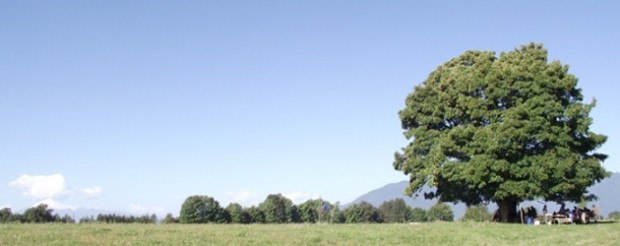 Panguipulli Comunidad Santiago Curinao recupera territorio